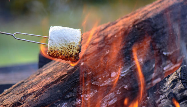Toasting Marshmallows on a Campfire!
