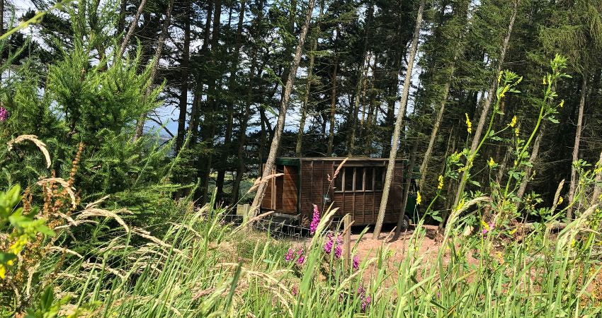 Juniper offers privacy in our woodland, glamping with a hot tub